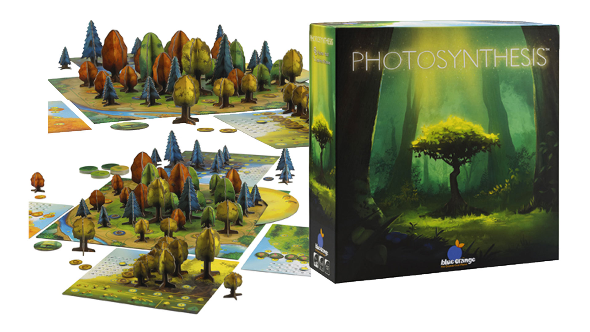 Photosynthesis Card Game